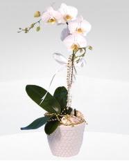 1 dallı orkide saksı çiçeği  Bursa çiçek satışı kestel uluslararası çiçek gönderme