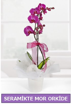 Seramik içerisinde birinci kalite tek dallı mor orkide  Bursadaki çiçekçiler karacabey çiçekçi telefonları