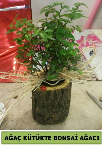 Doğal ağaç kütük içerisinde bonsai ağacı  çiçek siparişi Bursa karacabey çiçek yolla