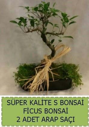 Ficus S Bonsai ve arap saçı  Bursa çiçekçi osman gazi çiçek gönderme sitemiz güvenlidir