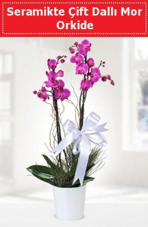 Seramikte Çift Dallı Mor Orkide  Bursa osmangazi online çiçekçi , çiçek siparişi