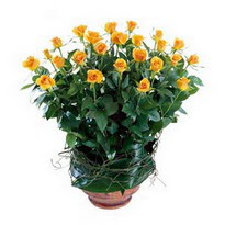 Bursa çiçek gönderimi nilüfer cicekciler , cicek siparisi  10 adet sari gül tanzim cam yada mika vazoda çiçek