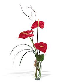 Bursa çiçek gönder nilüfer çiçek siparişi vermek  cam yada mika Vazoda 3 adet  antoryum