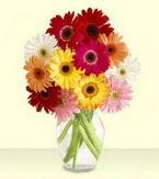 Bursa yıldırım çiçek yolla , çiçek gönder , çiçekçi   cam yada mika vazoda 15 özel gerbera