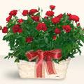 Bursadaki çiçekçiler karacabey çiçekçi telefonları  11 adet kirmizi gül sepette