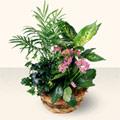 Bursaya çiçek yolla orhangazi çiçek satışı  5 adet canli çiçek sepette