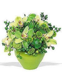 cam yada mika vazoda 5 adet orkide   Bursa çiçek satışı kestel uluslararası çiçek gönderme