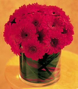 online Bursa ucuz çiçek gönder  23 adet gerbera çiçegi sade ve sik cam içerisinde