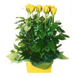 11 adet sari gül aranjmani  Bursa çiçek satışı kestel uluslararası çiçek gönderme