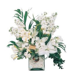 Bursa inegöl kaliteli taze ve ucuz çiçekler  sadece beyazlardan olusmus mevsim cam yada mika tanzim