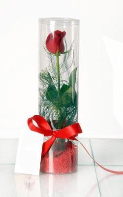 Bursa çiçek yolla nilüfer çiçek gönderme  Silindir vazoda tek kirmizi gül