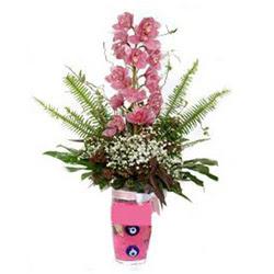 çiçekçi Bursa nilüfer hediye çiçek yolla  cam yada mika vazo içerisinde tek dal orkide çiçegi