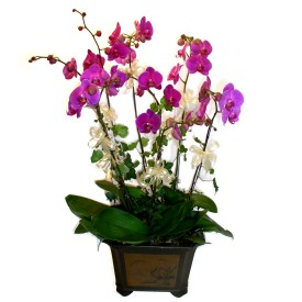 çiçekçiler Bursa online çiçek gönderme sipariş  4 adet orkide çiçegi