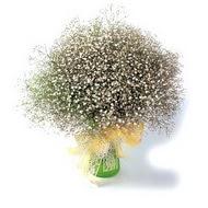 cicekci Bursa inegöl çiçek mağazası , çiçekçi adresleri  cam yada mika vazo içerisinde cipsofilya demeti