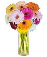 Bursa inegöl kaliteli taze ve ucuz çiçekler  Farkli renklerde 15 adet gerbera çiçegi