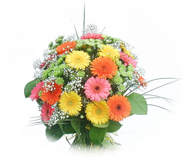13 adet gerbera çiçegi buketi  Bursa ya çiçek yolla mudanya cicek , cicekci