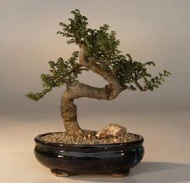 ithal bonsai saksi çiçegi  Bursa çiçek siparişi karacabey 14 şubat sevgililer günü çiçek