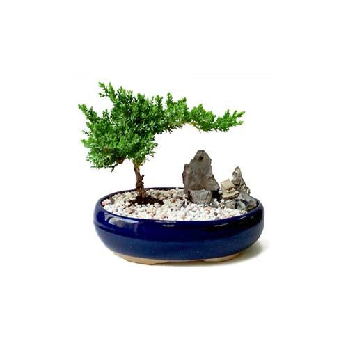ithal bonsai saksi çiçegi  Bursa çiçek nilüfer İnternetten çiçek siparişi