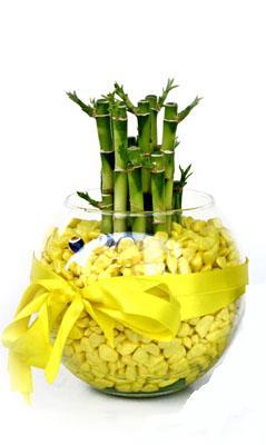 cam fanus içerisinde bambo  Bursa osmangazi internetten çiçek satışı