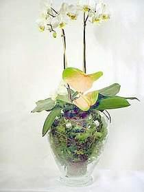 Bursaya çiçek yolla orhangazi çiçek satışı  Cam yada mika vazoda özel orkideler