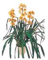 çiçek yolla Bursa orhaneli çiçekçiler  Orchiede ithal büyük boy saksi