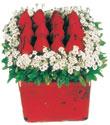 Bursa çiçek nilüfer İnternetten çiçek siparişi  Kare cam yada mika içinde kirmizi güller - anneler günü seçimi özel çiçek