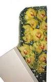 Bursa çiçek nilüfer İnternetten çiçek siparişi  Kutu içerisine dal cymbidium orkide