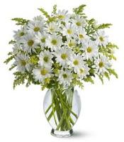 Vazo içerisinde beyaz krizantem çiçekleri  Bursa orhangazi internetten çiçek siparişi