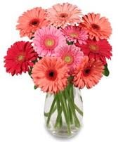 vazo içerisinde 13 adet gerbera çiçeği  Bursa çiçek gönder nilüfer çiçek siparişi vermek