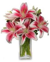 Vazo içerisinde 5 dal kazablanka çiçeği  Bursa çiçek gönderimi nilüfer cicekciler , cicek siparisi