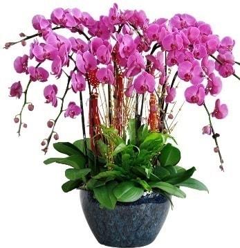 9 dallı mor orkide  Bursa çiçek siparişi karacabey 14 şubat sevgililer günü çiçek