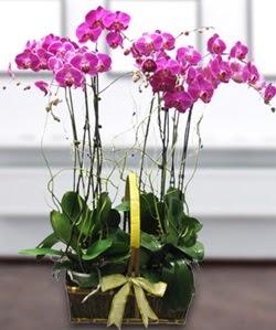 4 dallı mor orkide  Bursa iznik hediye sevgilime hediye çiçek
