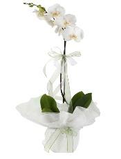 1 dal beyaz orkide çiçeği  çiçek Bursa yenişehir çiçekçi mağazası