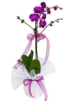 Tek dallı mor orkide  Bursa çiçekçi osman gazi çiçek gönderme sitemiz güvenlidir