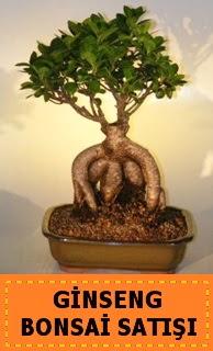 Ginseng bonsai satışı japon ağacı  çiçekçiler Bursa online çiçek gönderme sipariş