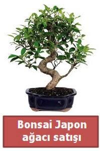 Japon ağacı bonsai satışı  Bursa çiçek gönder nilüfer çiçek siparişi vermek