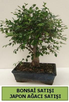 Minyatür bonsai japon ağacı satışı  çiçek siparişi Bursa karacabey çiçek yolla