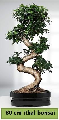 80 cm özel saksıda bonsai bitkisi  Bursa çiçekçi osman gazi çiçek gönderme sitemiz güvenlidir