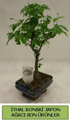 İthal bonsai japon ağacı bitkisi  Bursa büyük orhan yurtiçi ve yurtdışı çiçek siparişi