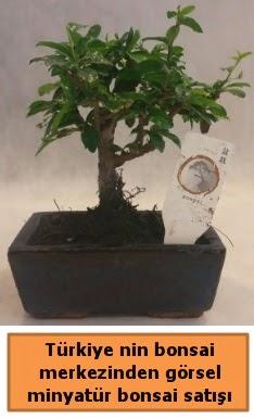 Japon ağacı bonsai satışı ithal görsel  Bursa çiçek yolla nilüfer çiçek gönderme