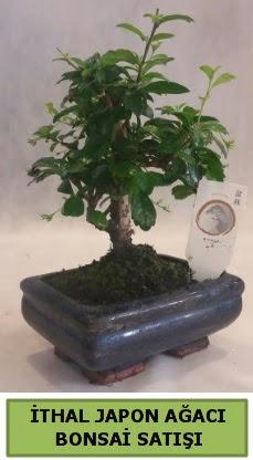 İthal japon ağacı bonsai bitkisi satışı  Bursa çiçekçi osman gazi çiçek gönderme sitemiz güvenlidir