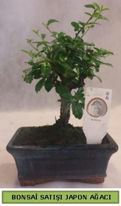 Minyatür bonsai ağacı satışı  Bursa çiçek nilüfer İnternetten çiçek siparişi