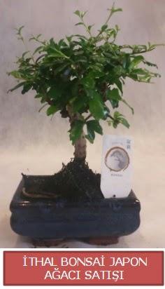İthal küçük boy minyatür bonsai ağaç bitkisi  Bursa çiçekçi osman gazi çiçek gönderme sitemiz güvenlidir