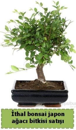 İthal bonsai saksı çiçeği Japon ağacı satışı  Bursadaki çiçekçiler karacabey çiçekçi telefonları