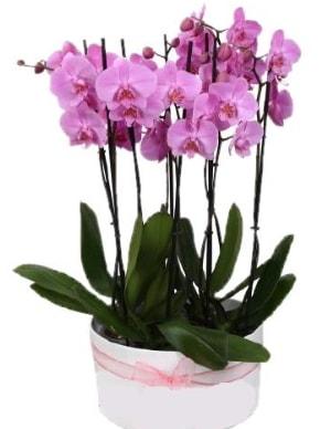 Beyaz seramik içerisinde 7 dallı mor orkide  Bursa çiçekçi osman gazi çiçek gönderme sitemiz güvenlidir