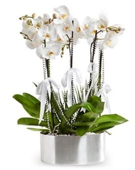Beş dallı metal saksıda beyaz orkide  Bursa çiçek yolla nilüfer çiçek gönderme