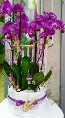 Seramik vazoda 4 dallı mor lila orkide  Bursa ya çiçek yolla mudanya cicek , cicekci
