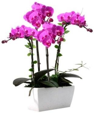 Seramik vazo içerisinde 4 dallı mor orkide  Bursaya çiçek yolla orhangazi çiçek satışı