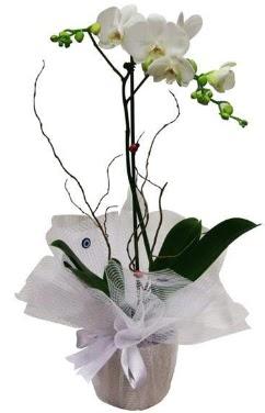 Tek dallı beyaz orkide  çiçekçiler Bursa online çiçek gönderme sipariş