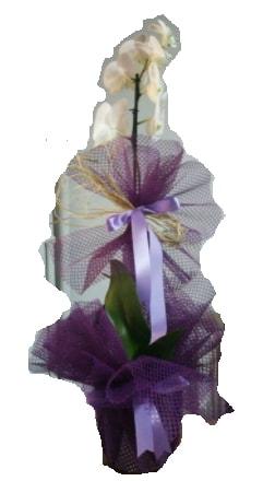 Tek dallı beyaz orkide süper kalite ithal  Bursa çiçek gönder nilüfer çiçek siparişi vermek